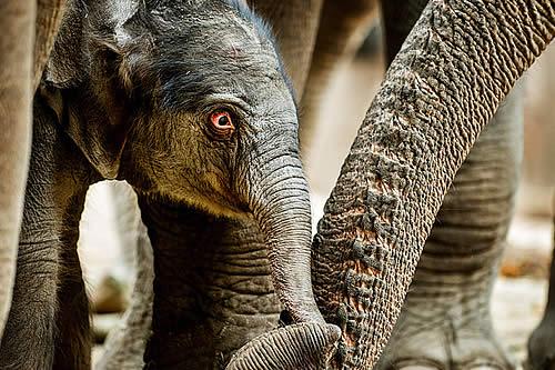 Se mete en el recinto de los elefantes en un zoo y casi lo lamenta