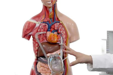 El órgano blando, una víctima física de las emociones humanas