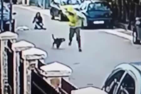 Un perro salva a una mujer de un robo mordiendo al ladrón en los glúteos