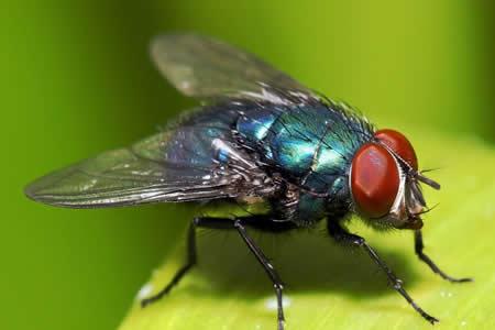 La actividad de una enzima reduce la esperanza de vida en moscas y gusanos