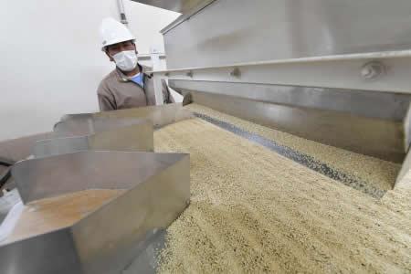 Bolivia exportó quinua en 2017 por un valor superior a $us 84 millones