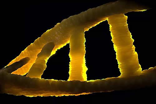Un paso más hacia la prevención del cáncer: científicos ven en tiempo real cómo se repara el ADN