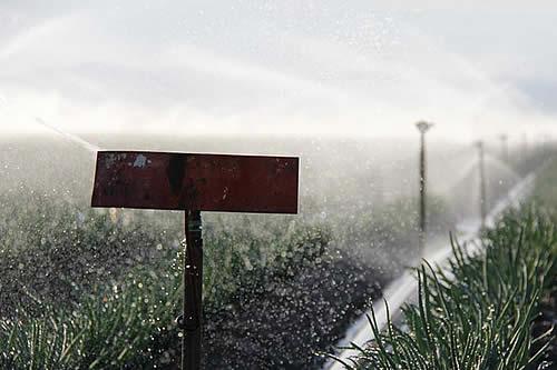 Especulando con el agua: ¿bien comercial o derecho humano?