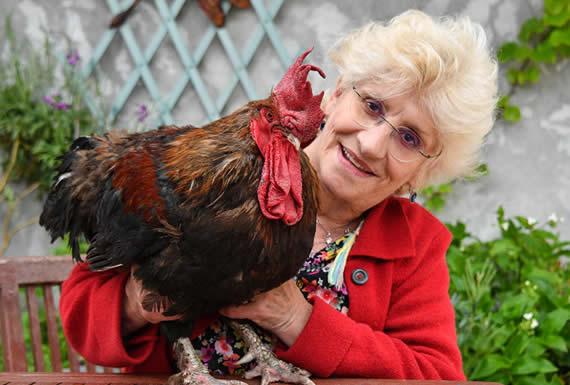 Llevan a un gallo a juicio en Francia por cantar demasiado temprano
