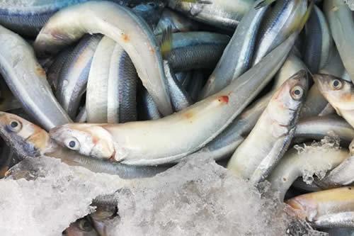 Decomisan 1.300 libras de pescado en El Alto