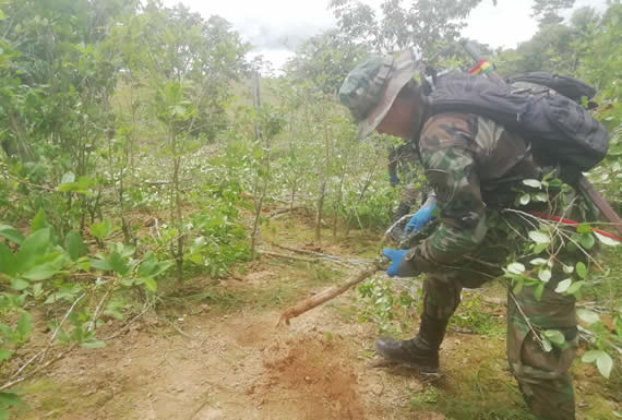 Fuerza de Tarea Conjunta erradicó 2.912 hectáreas de coca ilegal a nivel nacional