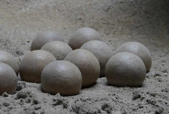 Un niño encuentra un nido de huevos de dinosaurio de 65 millones de años en China