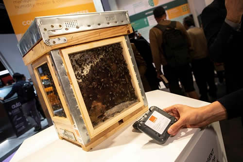 Las abejas también están conectadas a la red en el Mobile