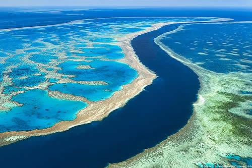 """Desarrollan técnicas para """"retrasar 20 años"""" la desaparición de la Gran Barrera de Coral en Australia"""