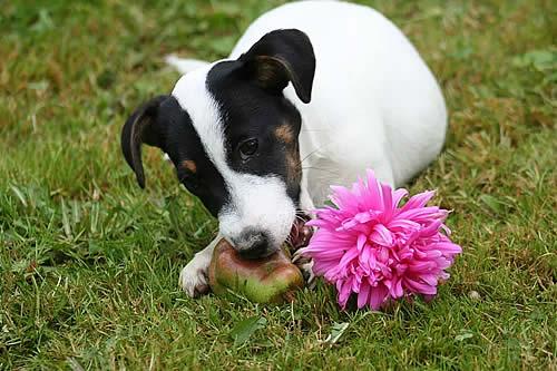 ¿Por qué los perros comen hierba y cuándo deberías preocuparte?