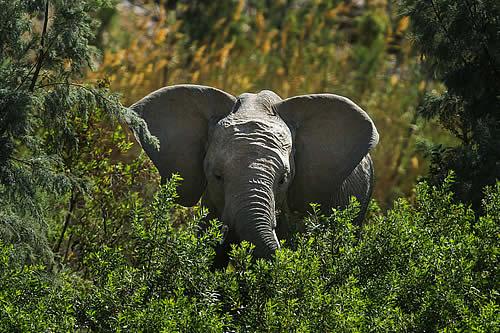 Un cazador furtivo es pisoteado hasta la muerte por una manada de elefantes mientras trataba de huir de los guardabosques