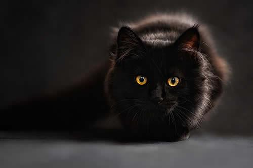 Un gato 'pirómano' provoca un incendio a plena luz del día
