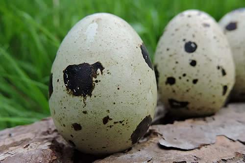 ¿De gallina o codorniz? Los tipos de huevos más saludables y la mejor forma de cocinarlos