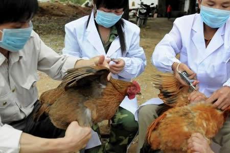 OMS: No se ha confirmado transmisión humano a humano de la gripe aviar H7N9