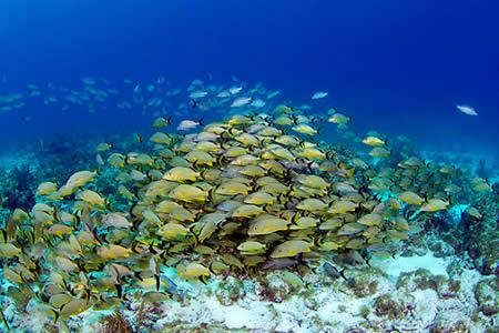 Calentamiento global y sobrepesca amenazan la vida marina en polos y trópico