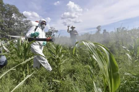 Presidente recibe recomendaciones de expertos argentinos e inicia fumigación contra langostas