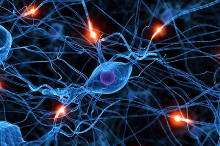 Descubren que el Huntington altera neuronas desde que inician su desarrollo