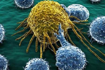 Identifican proteínas cuya supresión podría curar cánceres como la leucemia