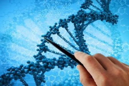 Descubren cómo son las estructuras del ADN en bacterias diminutas