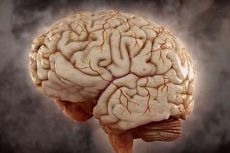Descubren la zona del cerebro que genera las decisiones en función de memoria
