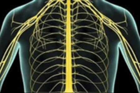 Empiezan a probar estimulación por electrodos en parapléjicos