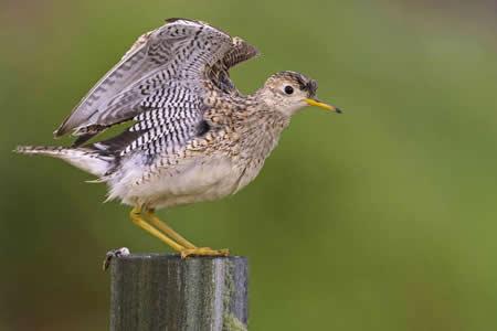 Las aves suicidas de Ecuador