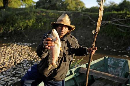 Miles de peces muertos cubren la superficie de un río en Paraguay