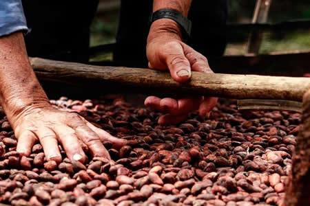 """Colombia conquista París con su cacao """"de paz"""""""