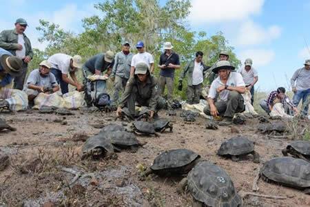Liberan en las islas Galápagos a 190 tortugas gigantes criadas en cautiverio