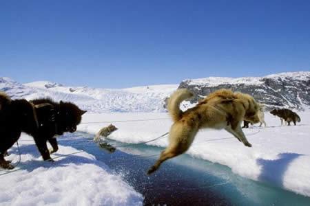 Perros acompañaron a humanos por puente de tierra de Bering, según estudio
