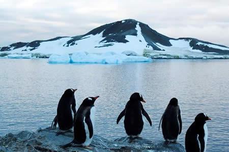"""Pingüinos chilenos """"celebran"""" su día gravemente amenazados, según Greenpeace"""