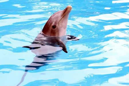 Ciudad de México veta el uso de delfines en espectáculos públicos