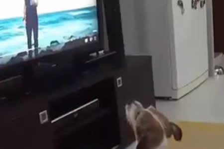Este perrito tiene una verdadera adicción a la canción 'Despacito'