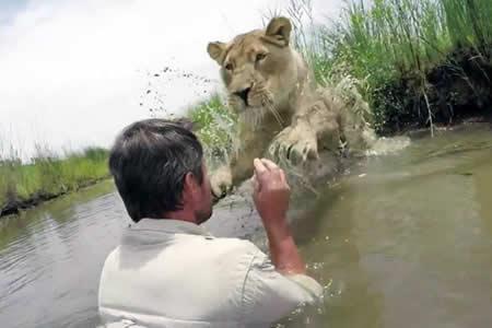 'El encantador de leones': Una leona adulta salta a abrazar al hombre que le salvó la vida