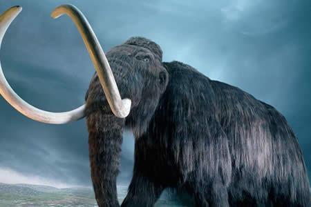 Un ambicioso proyecto pretende 'resucitar' a los mamuts en dos años
