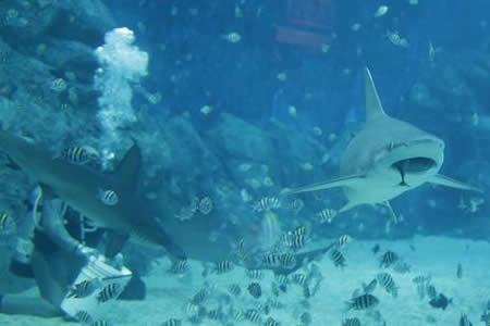 """Proyecto global para """"censar"""" tiburones y rayas amplía su objetivo"""