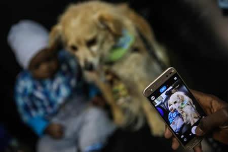 Los animales se convierten en terapia para los refugiados que llegan a Brasil