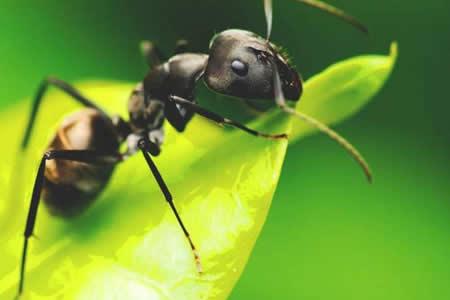 Algunas plantas pueden convertir a insectos herbívoros en caníbales