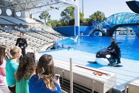 "Parques SeaWorld ofrecerán a visitantes encuentro más ""natural"" con orcas"