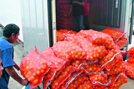 Productores alertan que ingreso de cebolla peruana los lleva a la quiebra