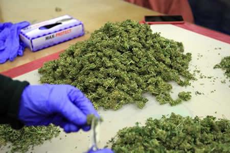 Expectativa y dudas en Uruguay tras inicio de venta de marihuana en farmacias