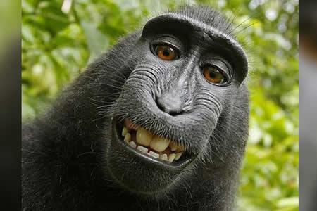 Cómo el famoso 'selfie' del macaco le costó la carrera y los ahorros a un fotógrafo