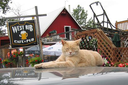 Muere el gato alcalde de una ciudad de Alaska