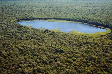 La selva amazónica concentra el 87 % de asesinatos de activistas en Brasil