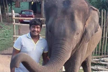 """Muere joven indio cuando trataba de hacerse un """"selfi"""" con un elefante"""