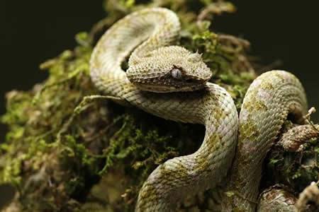Experto: a las farmacéuticas no les interesa atender mordeduras de serpientes
