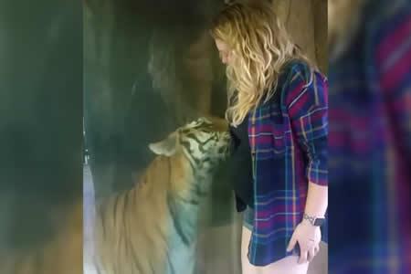 Una embarazada y un tigre viven un tierno momento en un zoo