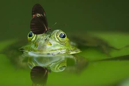 Descubren en Argentina la primera rana luminiscente del mundo