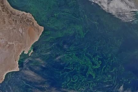 Una 'alfombra' de algas del tamaño de México cubre el mar Arábigo (y es alarmante)