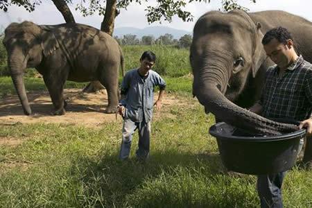 El secreto del café más caro del mundo lo guardan las boñigas de elefante